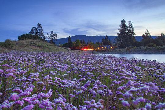 Sunset in Camden Percolation Lake, Los Gatos, California