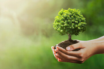 Wall Mural - hand holding tree on green nature with sunshine background. evironment eco earth day concept