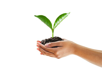 Wall Mural - hand holding young plant isolate on white background