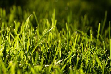natural green grass texture background