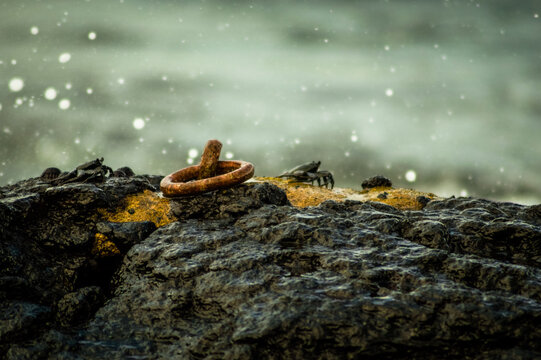 Crabs on a rock with a steel eyelet with splashing water