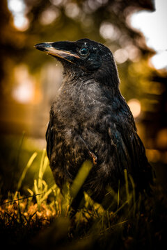 "Undercover Raven"" ISO 200 