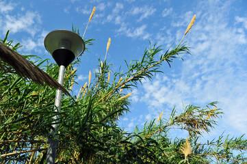 Canvas Prints Palm tree Street light through thick vegetation