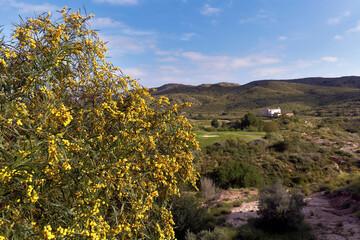 Landscape in La font del Llop in Monforte del Cid, Alicante province in Spain.