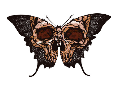 Greater death's head hawkmoth. Skull butterfly vector abstract illustration isolated on white background.