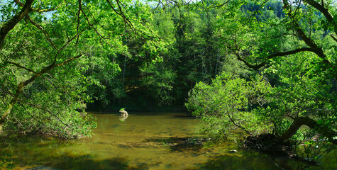 Foto auf Acrylglas Grun panoramic view of the Sioule river (Puy-de-Dome, Auvergne, France) in summer flows between the trees