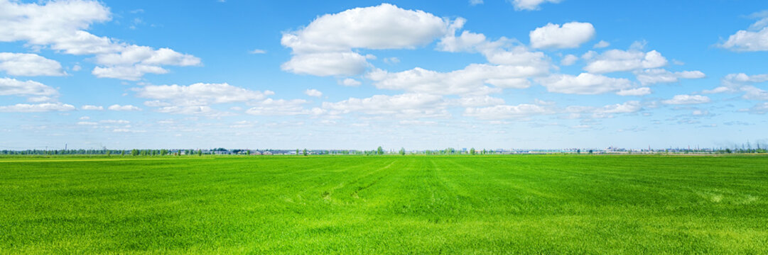 Green field and city on the horizon at sunny day panoramic wide angle view