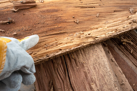 Background image Traces of wood that is eaten by termites, harms the wood by termites, wooden background