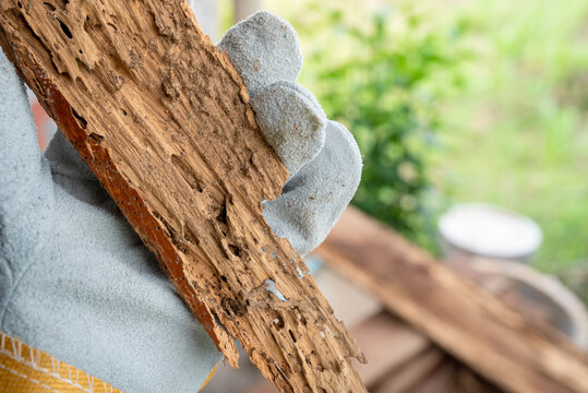 Background termite nests are traces of wood that is eaten by termites, endangering the wood by termites.
