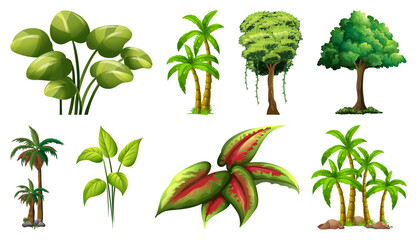Wall Mural - Set of variety plants and trees