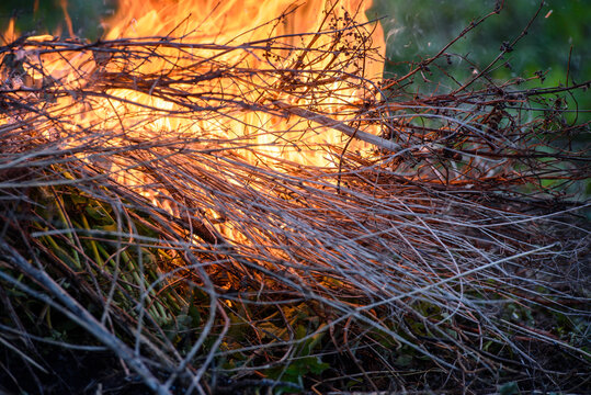 Close - up fire-burning dry branches