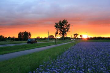 Kolorowy zachód słońca nad polami i drogą z samochodami wieczorem.