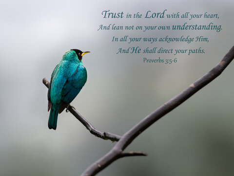 Inspirational, encouraging and uplifting Bible Verses printed on beautiful bird photography.