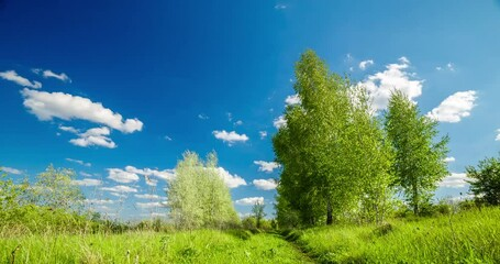 Fototapete - Rural summer landscape. Blue sky with clouds, forest, road through green meadow. Nature landscape wilderness 4k time lapse. Countryside outdoors, relaxation weather, smooth movements, space scenic.