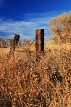 San Pedro Riparian Conservation Area Arizona