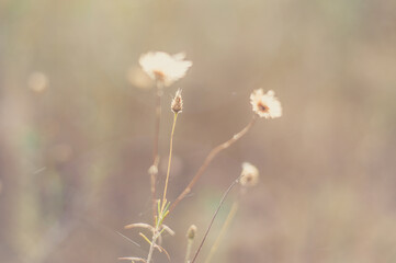 wild flowers in spring