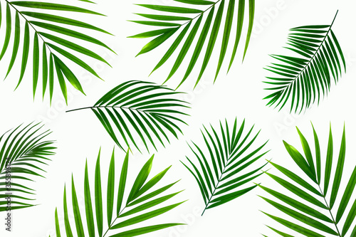 Wall mural tropical coconut palm leaf isolated on white background, summer background
