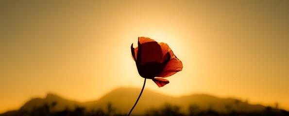 Photo Blinds Floral Flor de campo
