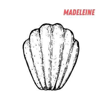 French dessert madeleine sketch. French pastries . Food menu design template. Hand drawn sketch vector illustration.