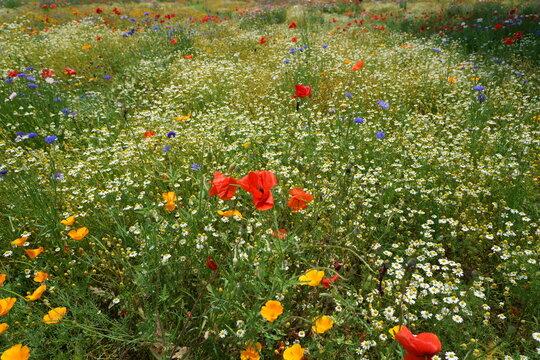 夏のカラフルな花が一杯の野原