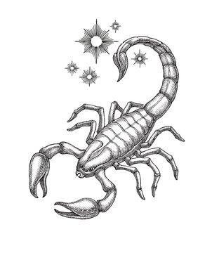 Hand drawn illustration, Scorpio, zodiac sign, engraving style.