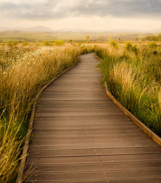 path in the field - Flanders Moss Nature Reserve