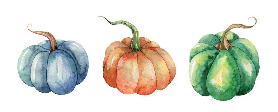 Hand drawn watercolor set of realistic botanical pumpkins