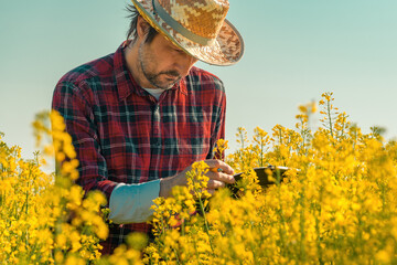 Oilseed rape farmer writing notes on clipboard notepad in blooming field
