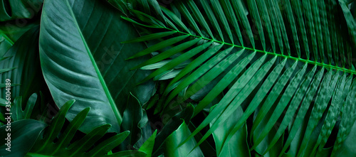 Wall mural closeup nature view of tropical green monstera leaf and palms background. Flat lay, fresh wallpaper banner concept
