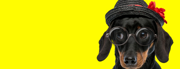 Poster Pierre, Sable adorable teckel dachshund dog wearing glasses and hat