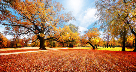 Fotomurales - Awesome Autumn Landscape in Muskau Park. wonderful picturesque Scene with Majestic Colorful Trees and Perfect blue sky. amazing Autumn Landscape near of Bad Muskau castle, Saxony, Germany,