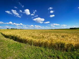 Getreidefeld Landschaft Fotoväggar