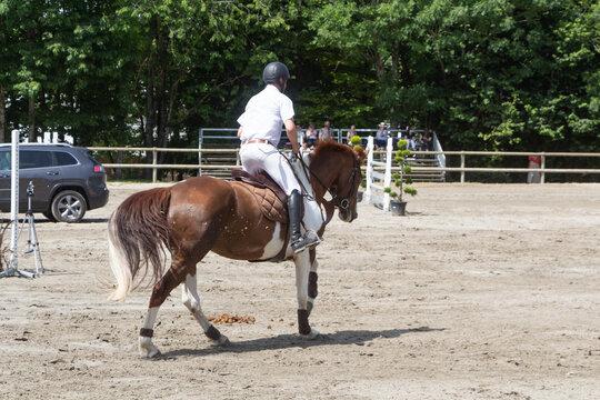 Man riding a pinto horse at gallop
