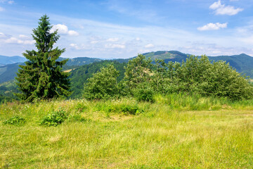 Wall Mural - mountain scenery in summer. blue sky with clouds. green grass on the meadows. calm nature scenery of carpathian countryside