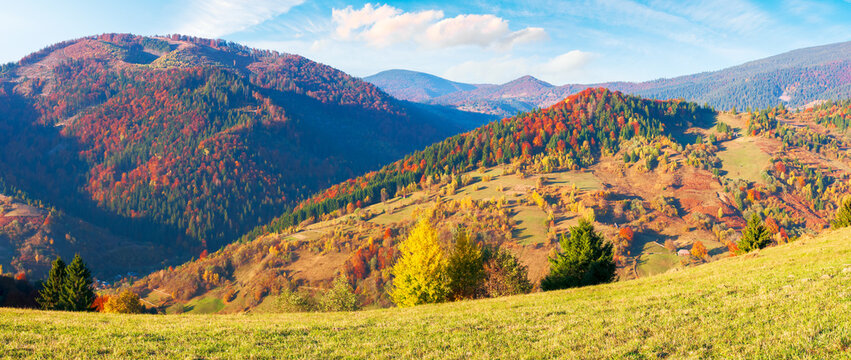 mountainous countryside in autumn. landscape with forests in fall colours and grassy meadows in evening light. blue sky with puffy clouds. colorful nature scenery