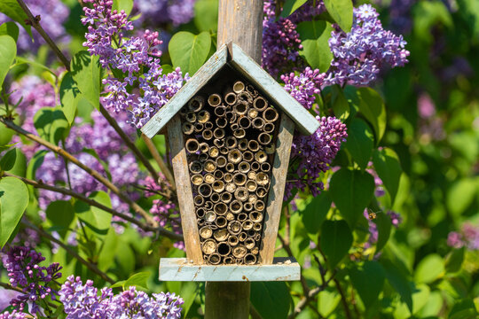 Close up front view of aged antique bee hotel with wooden tubes and purple flowers to background