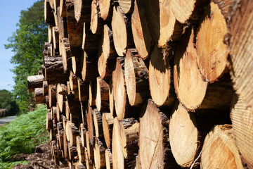 Fototapeten Brennholz-textur stère de bois
