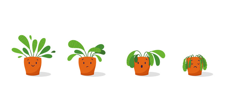 Cute sad wilted plant in a pot. Stages of withering, abandoned and scared houseplant without watering and care. Potted plant dying. Vector illustration