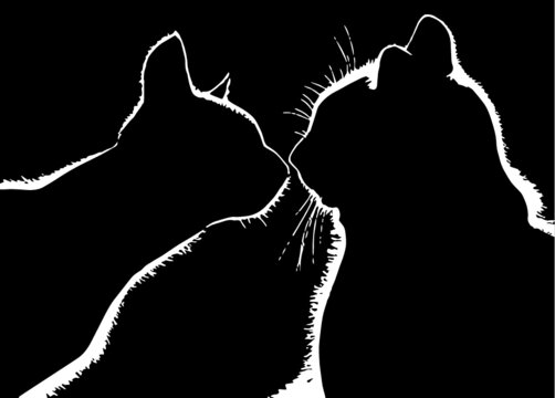 black kisses cats silhouette
