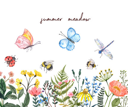 Watercolor summer meadow illustration. Wildflowers border. Bright colorful spring flowers, bees, butterflies, dragonfly, butterfly, isolated on white background. Green leaves, grass herbs