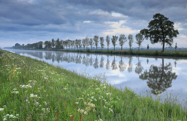 Wall Mural - tree row reflected in quiet river in dusk