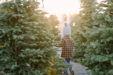 Young boy walking in christmas trees at sunset