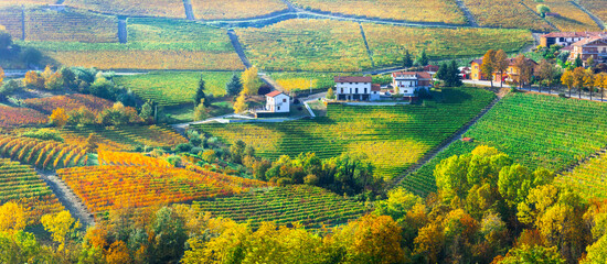 Golden vineyards and picturesque villages of Piedmont. famous wine region of northern Italy