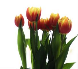 Obraz tulipany, bukiet kwiatów - fototapety do salonu