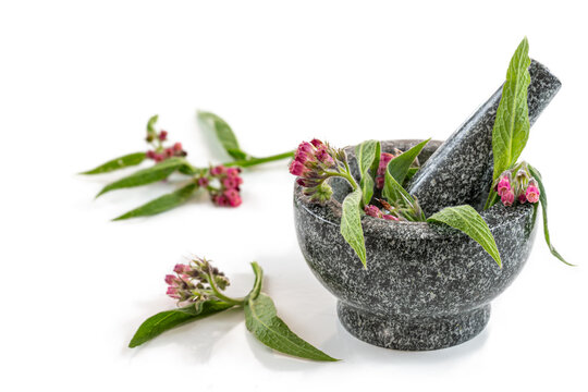 Ceramic mortar with Medicinal plant comfrey Symphytum officinale on a white background. It is used for outdoor applications, on gardening,