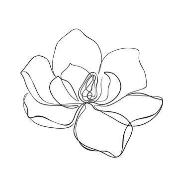 Magnolia flowers continuous line art. Abstract minimal hand drawing sketch. Vector illustration