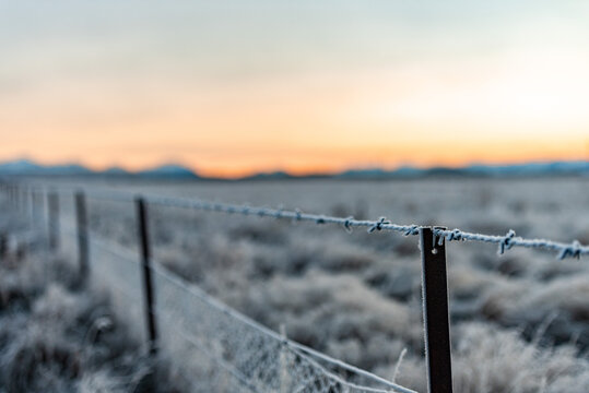 Frosty Barbed Wire Fence