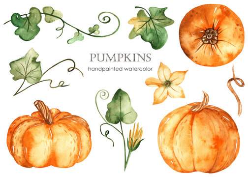 Watercolor set with orange pumpkins, leaves, flowers isolated on white background.