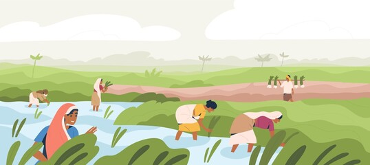 Smiling Indian farmers working in paddy field vector flat illustration. Man and woman in traditional clothes picking harvest. Male and female agricultural workers at plantation landscape