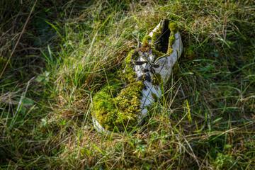 Chaussure couverte de mouse et d'herbe